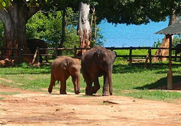 Beautiful Southern Sri Lanka